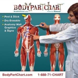 bodypart chart discount